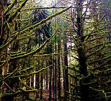 La Push Forest by bron stadheim