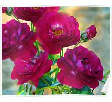 Red Roses at Sunset Poster