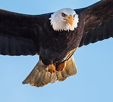 Eagle in Your Face by John Williams