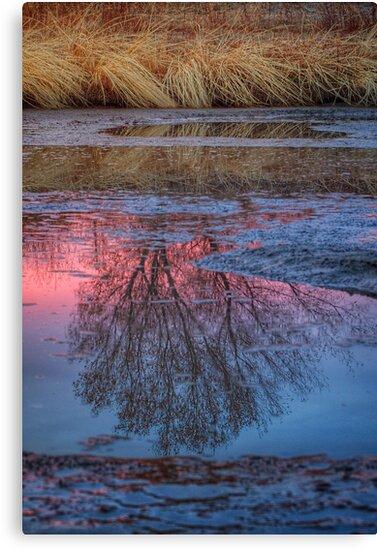 Between Beauty by Bob Larson