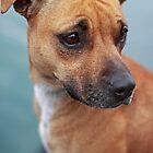 Harbour Dog by Roxanne du Preez