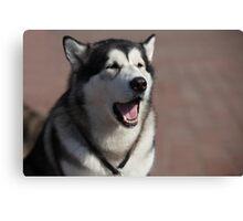 Siberian huskies Canvas Print