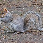 Squirrel I by Soniris