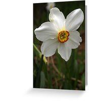 Daffodil (2) Greeting Card