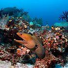 Reef Boss by Norbert Probst
