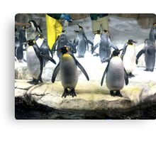 Penguin Army Canvas Print