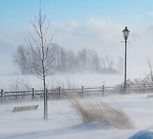Snow Squall by Joanne  Bradley