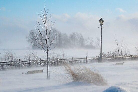 Snow Squall by Joanne  Bradley