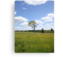 Lonely Tree - Welsh Botanical Gardens Canvas Print