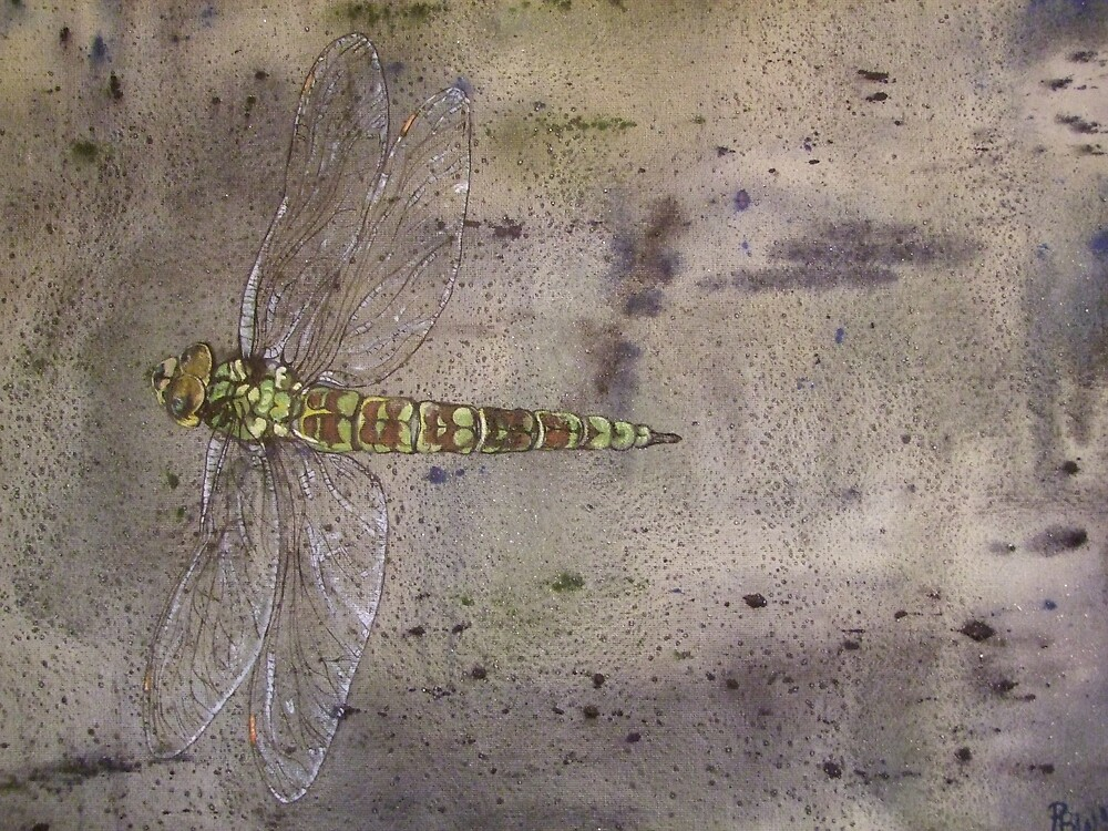 Dragonfly in flight-PPMPMDF001 by Pat - Pat Bullen-Whatling Gallery