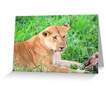 Lioness and kill Greeting Card