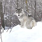 My Wolf : The kiss of the wolf by Poete100