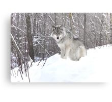My Wolf : The kiss of the wolf Metal Print