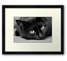 Miss Kitty Loving The Attention Framed Print