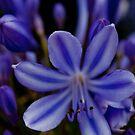 Purple Flower by Alastair Creswell