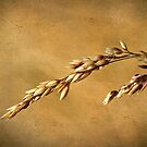 Golden Wheat by Robyn Carter