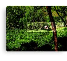 Duck flying by VRS2 Canvas Print