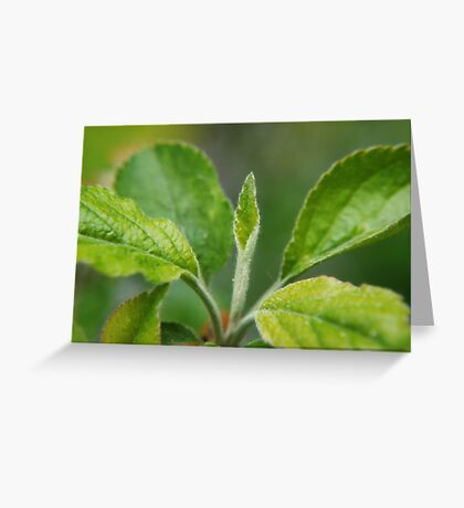 A New Leaf is Born VRS2 Greeting Card
