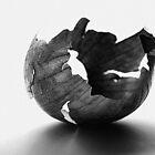 Onion Peel by vivendulies