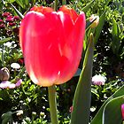 Tulip by ThePaintedLady