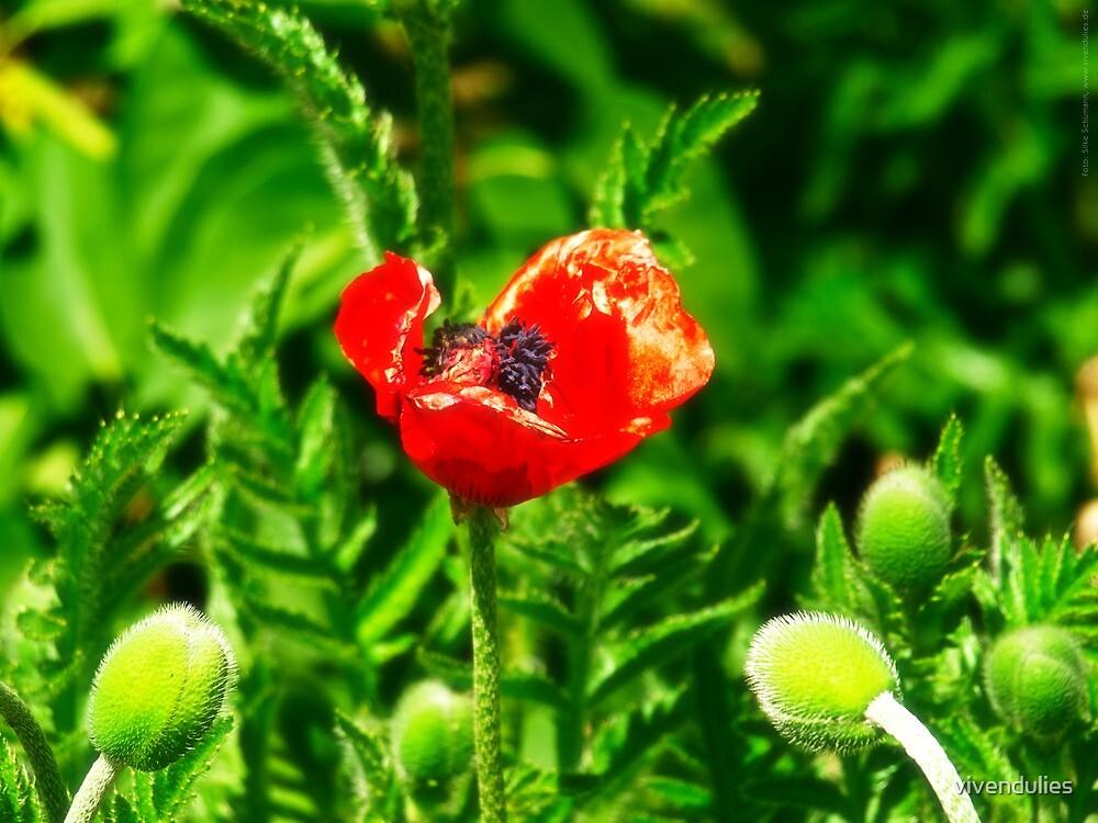 Poppy (Velvia-Style) VRS2 by vivendulies
