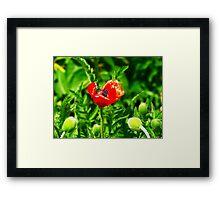Poppy (Velvia-Style) VRS2 Framed Print