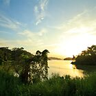 Gatun lakes jungle by Eti Reid