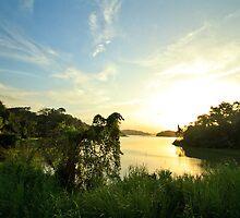 Gatun lakes jungle by Eti Reid