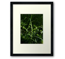 Dew Drops in the Gras Framed Print