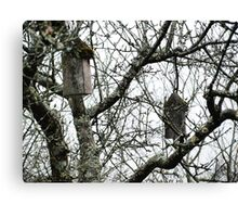 Hanging Bird Houses Canvas Print