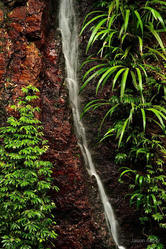 """Sanctuary"" ∞ Lamington National Park, QLD - Australia  by Jason Asher"