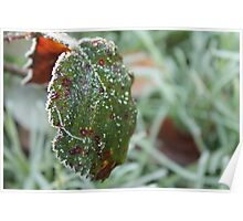 Frosty Leaf Poster