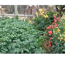 Companion planting Photographic Print