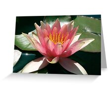 Pink Water Lily at Bennetts Water Gardens Greeting Card
