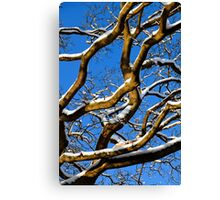 Graphic Trees Canvas Print