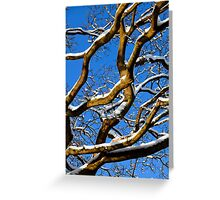 Graphic Trees Greeting Card