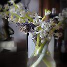 Hyacinths in Vase  by scarletjames