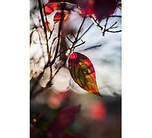 Autumn Leaf In The Sun Photographic Print
