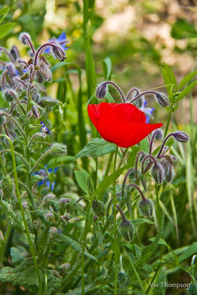 Poppy & Borage by vivsworld