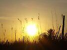 Sunrise 2 by ©Dawne M. Dunton