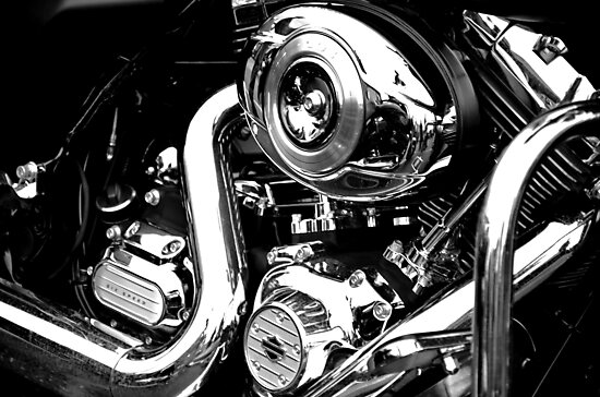 Up close with Harley by Martina Fagan