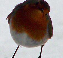 Bobbin the Robin by Jacqueline Longhurst