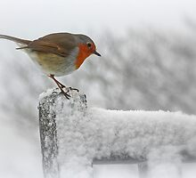 Snowbird by Beverley Barrett