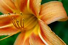 Lily Anthers Laden With Pollen by Gene Walls