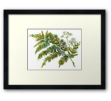 Watercolor fern and flowers Framed Print