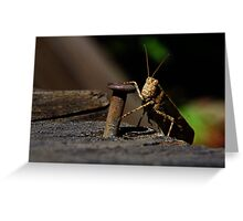 Mr. Hopper  Greeting Card