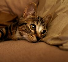I Dream of Catnip by Ladymoose
