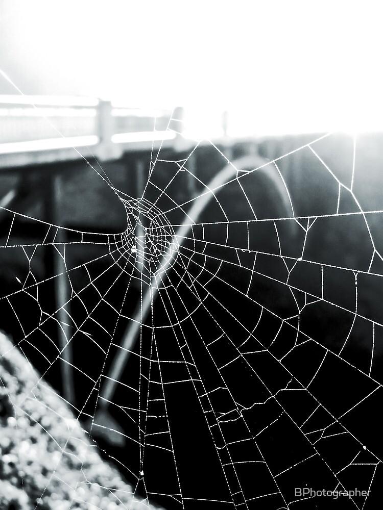 Dewey Spider Web by BPhotographer