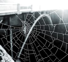 Dewey Spider Web by BPhotographer