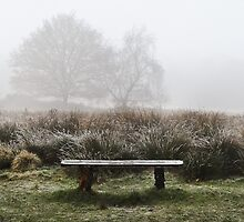 Bench by Hannah Foley